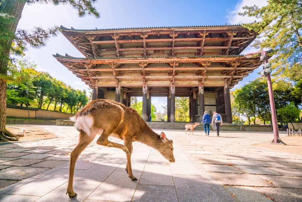 奈良県でファクタリング 最短即日で資金調達できる効果的な方法