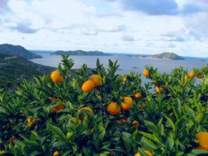 愛媛県でファクタリング 最短即日で資金調達できる効果的な方法