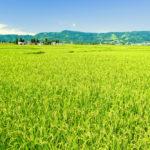 新潟県でファクタリング 最短即日で資金調達できる効果的な方法