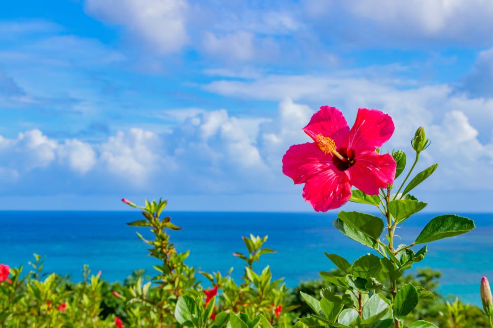 沖縄県でファクタリング 最短即日で資金調達できる効果的な方法